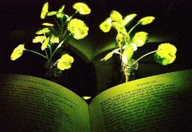 گیاهان درخشان جایگزین لامپ می شوند!