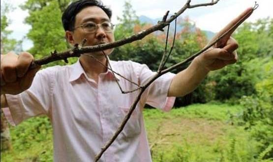 پرورش بزرگترین حشره ۶۴ سانتی متری دنیا در چین