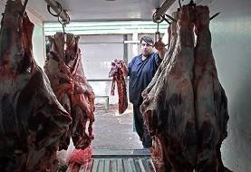 گوشت گوسفندی داغستان روس به ایران میآید