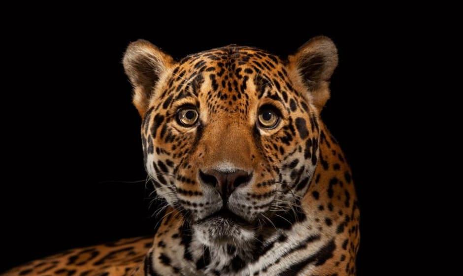 فیلم نشنال جئوگرافیک از یوزپلنگهای نادر ایران