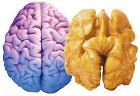 ارتباط قوی بین نوشیدن آب و حفظ سلامت مغز