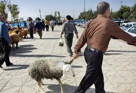 دامپزشکی هرمزگان به عزاداران حسینی: خون دام های نذری را به سر و صورت نمالید!