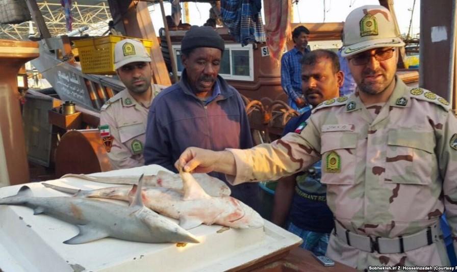 بازداشت هفت ملوان در پی توقیف لنج صیادی کوسه بالسیاه متعلق به یکی از کشورهای خلیج فارس
