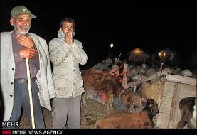 دستگیری ۲۲ سارق در مناطق زلزلهزده