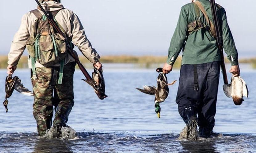 موارد ابتلا به آنفلوآنزای پرندگان در ۱۱ استان/ دست زدن به لاشه پرندگان ممنوع