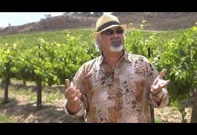 ارائه شرابهای ایرانی برای اولین بار در یکی از مدرنترین شراب سازیهای جنوب کالیفرنیا