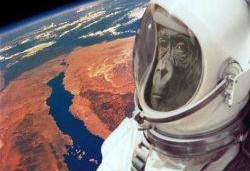 Iran's space monkey and nuclear programs linked: Israeli source