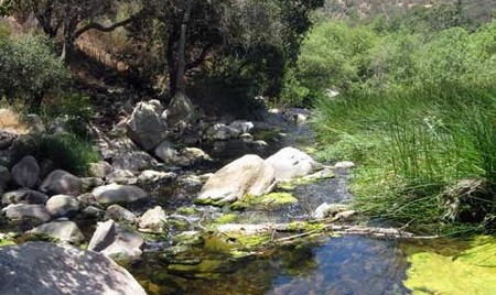 Iranian American Professionals in San Diego November Hike at Elfin Forest Park