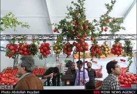 نمایشگاه زیبای میوههای قرآنی و حواشی آن (آلبوم تصویری)