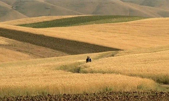 Abbas Kiarostami's The Wind Will Carry Us: Movie Night by Iranian Students Society