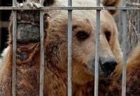 علت اصلی بوی بد باغوحش تهران حیوانات نیستند/رضایت حیوانات در باغ وحش قابل اندازهگیری است