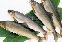 ۲۰ دلیل برای مصرف ماهی