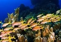 اسیدی شدن اقیانوسها اکوسیستم دریایی را بر هم میزند