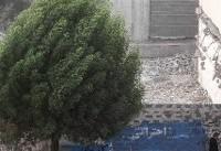 هوای تهران طوفانی نیست/ سرعت باد تا ساعات آینده کاهش مییابد