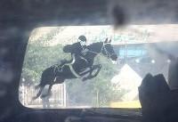 رهاسازی اسبهای ایرانی مقابل وزارت کشاورزی برای اعتراض به واردات