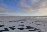 تهدید زندگی موجودات دریایی با ذوب شدن یخهای گرینلند