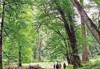 حضور هیأت کارشناسی ثبت جهانی جنگل هیرکانی در گیلان و مازندران