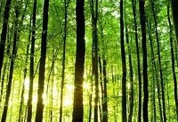 زندگی در نزدیکی جنگل برای مغز مفید است