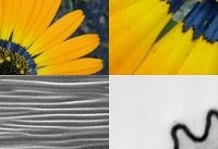 گلها با زنبورها حرف میزنند!