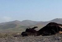 ۹۹ مستند زیستمحیطی متقاضی شرکت در «سینماحقیقت» شدند