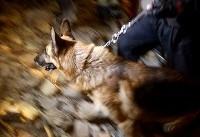 تکذیب کشف ۶ زلزله زده از زیر آوار توسط تیدا/ این سگ اصلا زنده یاب نیست
