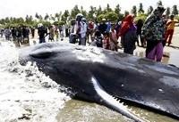 خودکشی گروهی نهنگها در سواحل آچه اندونزی