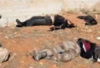 تلفات سنگین سعودی ها در صرواح یمن