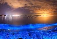 همه چیز درباره عجیب و غریب ترین و درخشان ترین خلیج کره زمین! +تصاویر