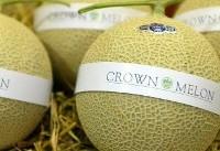 گرانترین میوه دنیا با ارزش ۶۰ میلیون تومان (عکس)