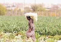 کشت سبزی و برنج با فاضلاب نداریم