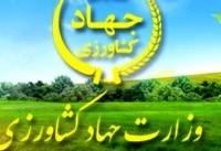 توزیع «جو» رایگان بین دامداران مناطق زلزلهزده استان کرمانشاه از ۲۸ آبان