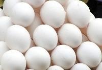 تخم مرغ کیلویی ۷۳۰۰ تومان/ عوامل افزایش قیمت تخم مرغ در بازار