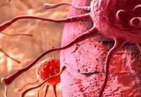 نبرد با سلولهای سرطانی به کمک پروتئینهای تازه کشف شده!