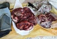 کشف گوشت خرس در جنوب تهران صحت ندارد