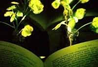 گیاهانی که قرار است جایگزین چراغ ها شوند!