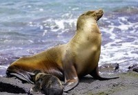 Third Sea Lion Attack in a Week Prompts Swimming Ban at San Francisco Park