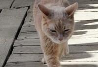 مرگ گربهای که ۲۰ سال در آلاسکا شهردار بود!