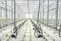 افتتاح بزرگترین گلخانه محصولات صیفی
