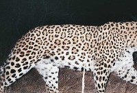Digging deep into human-carnivore conflicts in Iran