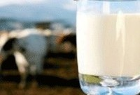 مضرات تغذیه کودکان زیر یک سال با شیرگاو