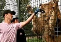 کار خطرناک دروازه بان تیم ملی فوتبال انگلیس / دست در دهان شیر! +عکس
