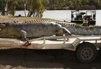 Australian police hunt killer of giant crocodile