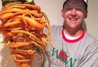 بزرگترین هویج جهان در دستان مرد سبز انگشتی+تصاویر