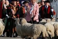 عکس روز: گوسفندها روی پل لندن