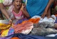 حمله سگ های ولگرد به کودک چهارساله / همسایه ها به جای کمک فیلم گرفتند! + فیلم
