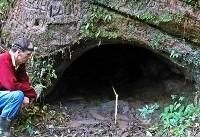 تونلهای عظیمی که تنبل های ماقبل تاریخ آنها را حفر کردهاند! + عکس