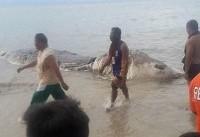 یک هیولای دریایی در فیلیپین کشف شد