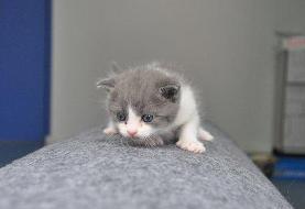 فروش انبوه گربه های کلون شده چینی + ویدئو