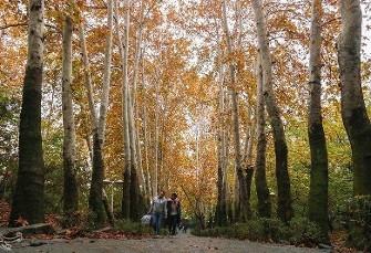 به روایت تصویر: پاییز در کوچهباغهای تهران