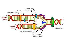 پژوهشگران شریف دستگاه تکثیر ژن با یک دهم قیمت نمونه خارجی ساختند